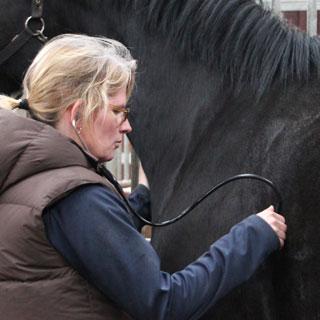 Handels- og forsikrings undersøgelser   En handelsundersøgelse er en god sikring for både køber og sælger når der handles heste.