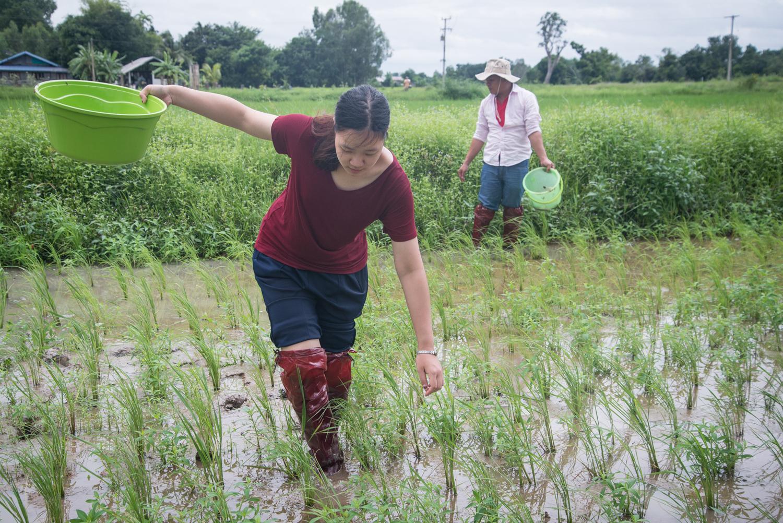 Organic Agriculture - Pest Management