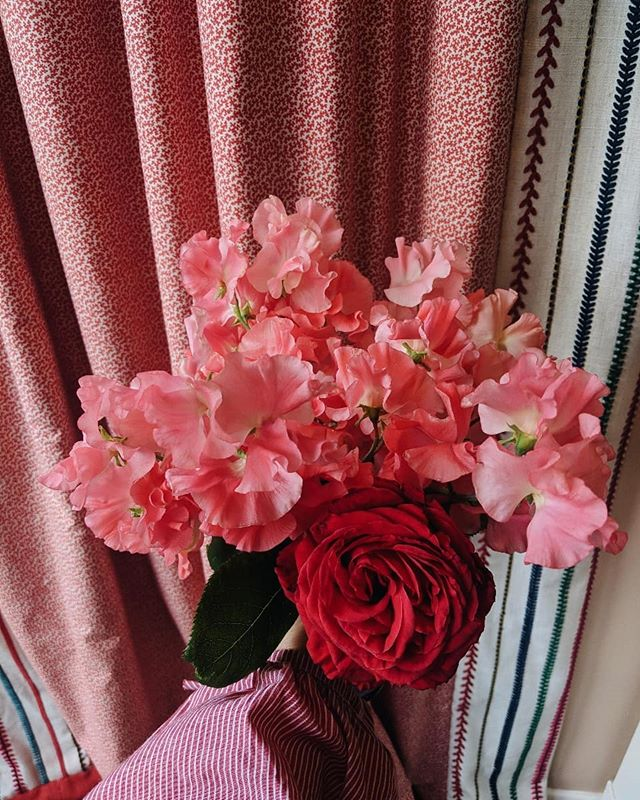 50 shades of pink.  A fallen garden rose amongst these neon sweet peas from @bloomfieldoflondon that I couldn't resist buying for myself. We all deserve flower treats now and again. . . . #studiosmudge #londonflorist #floraldesign #gardenpleasures #inspiredbypetals #inspiredbyflowers #inspiredbynature #petalandprops #seekinspirecreate #dsfloral #flowersandotherstories  #thegreengallery #interiorsandflorals