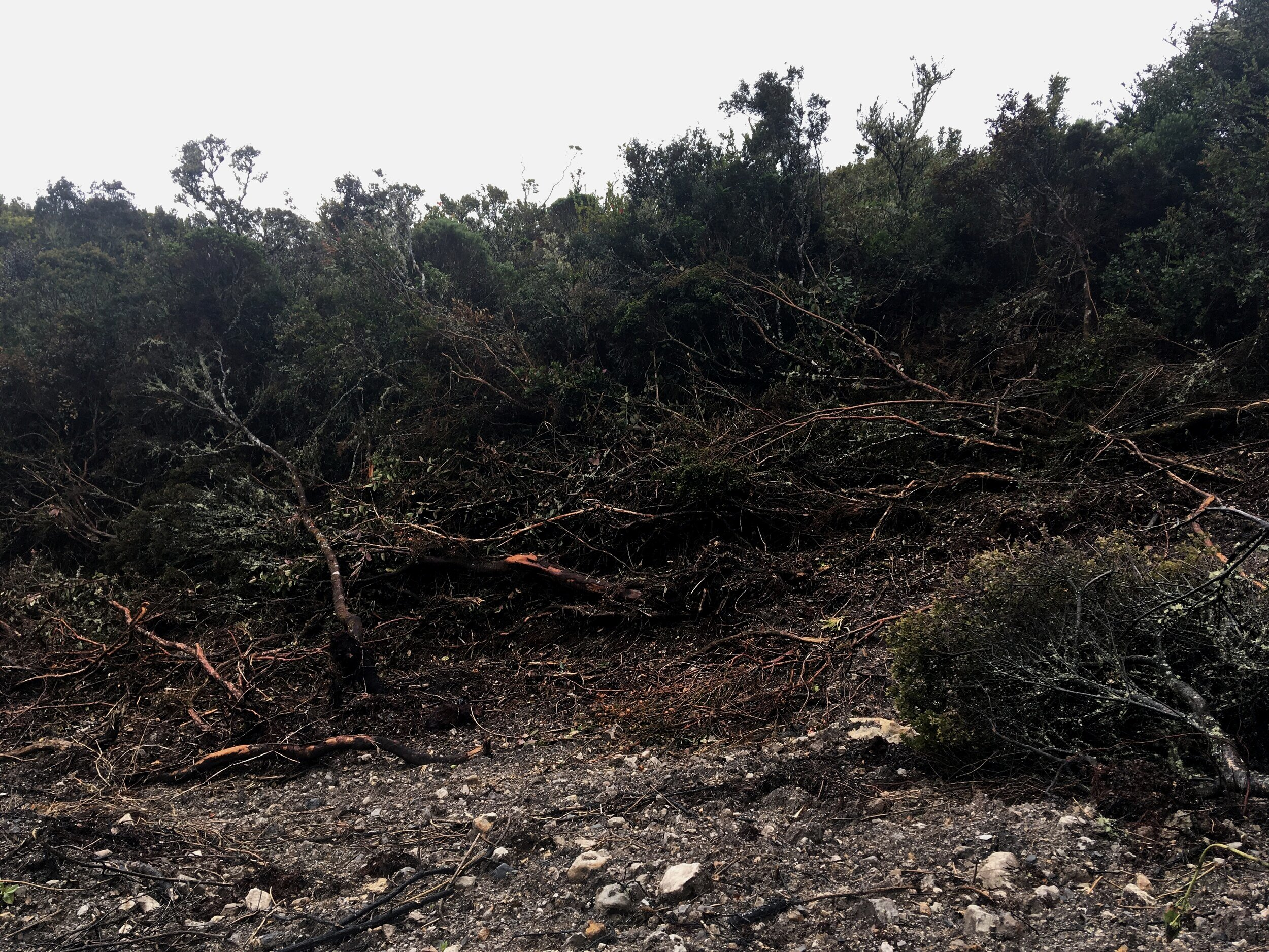 Deslizamiento en la reserva El Zoque. Guasca, Cundinamarca.