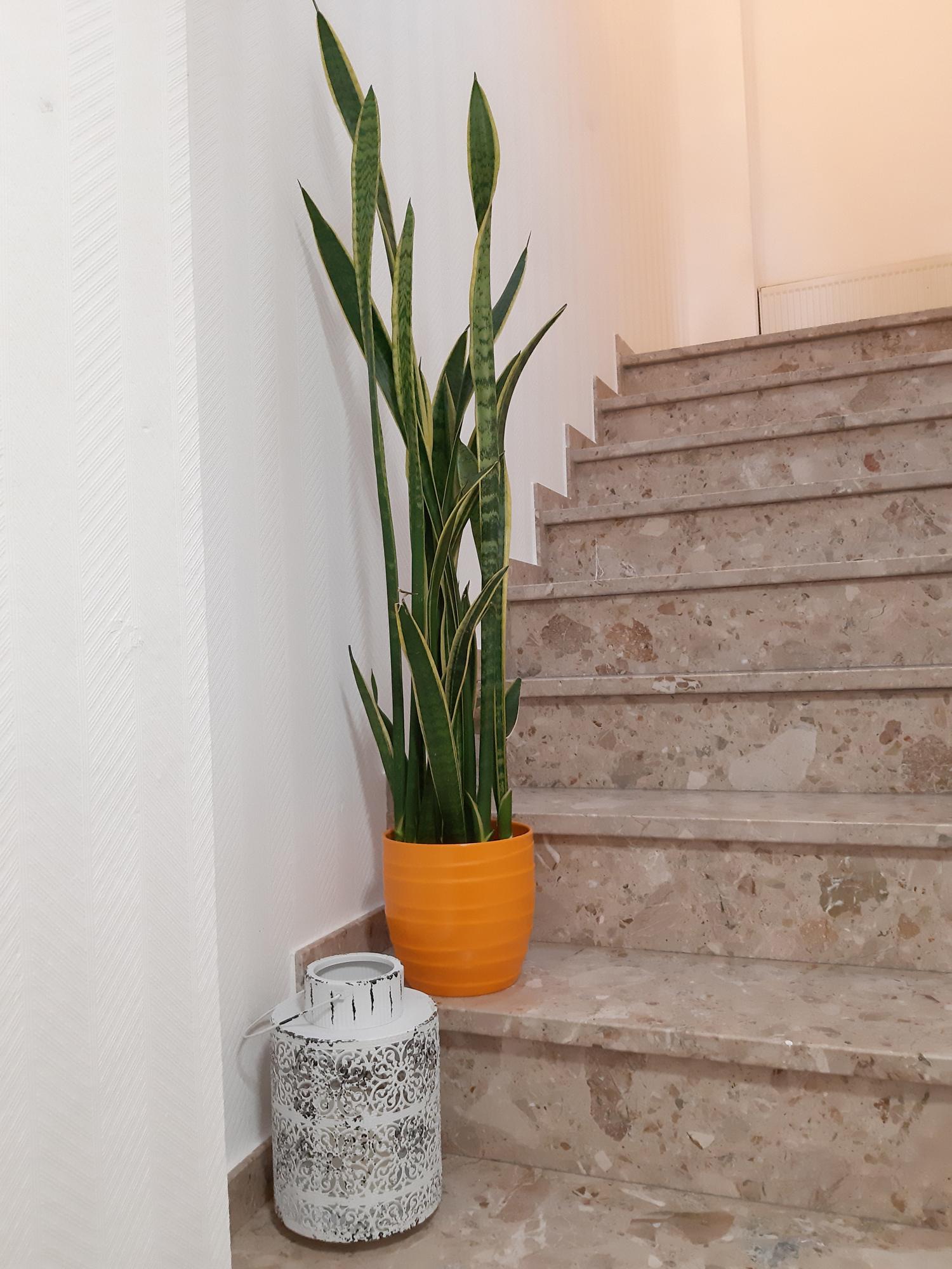 17-Bogenhanf-Treppe.jpg