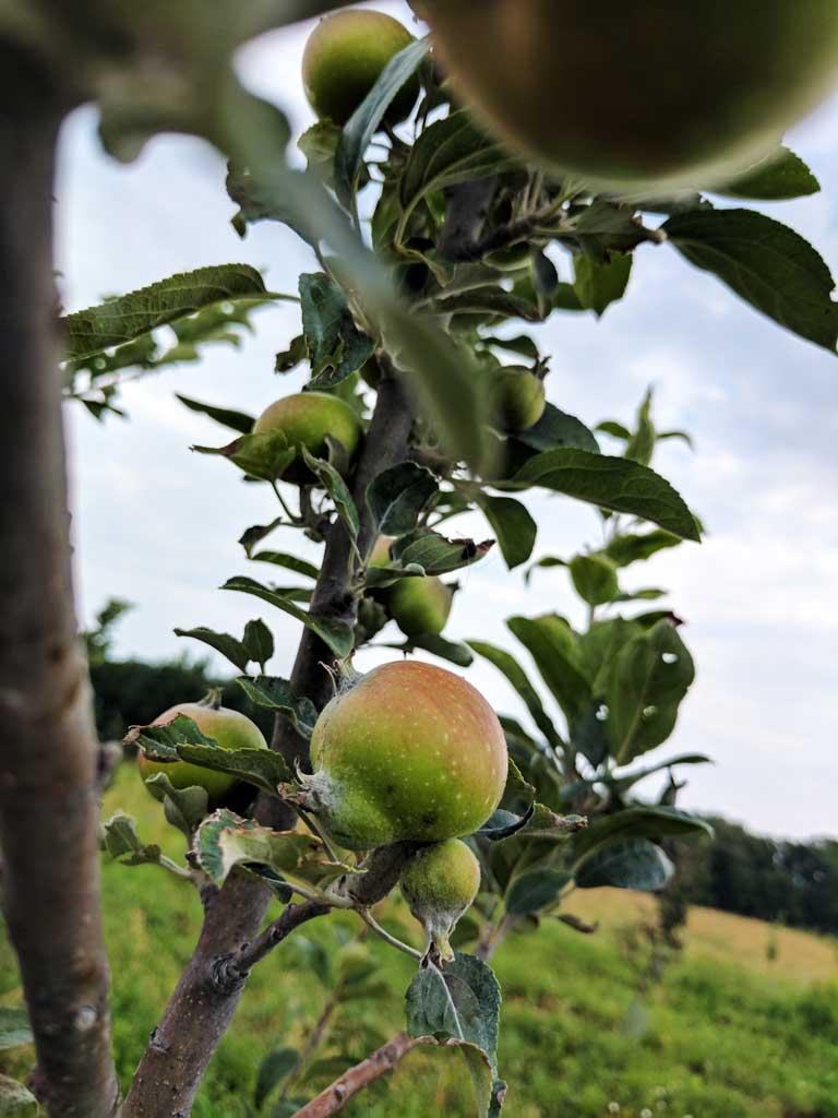 Good Life organic orchard