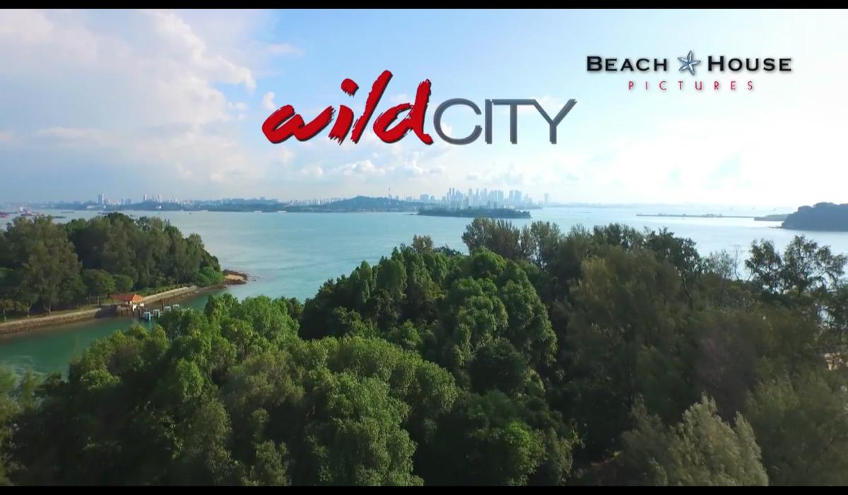 WildCityIslands