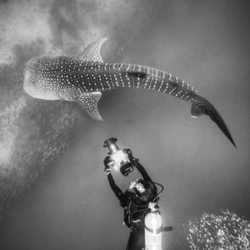 Mark swimming with a Whale Shark in Oman.jpg