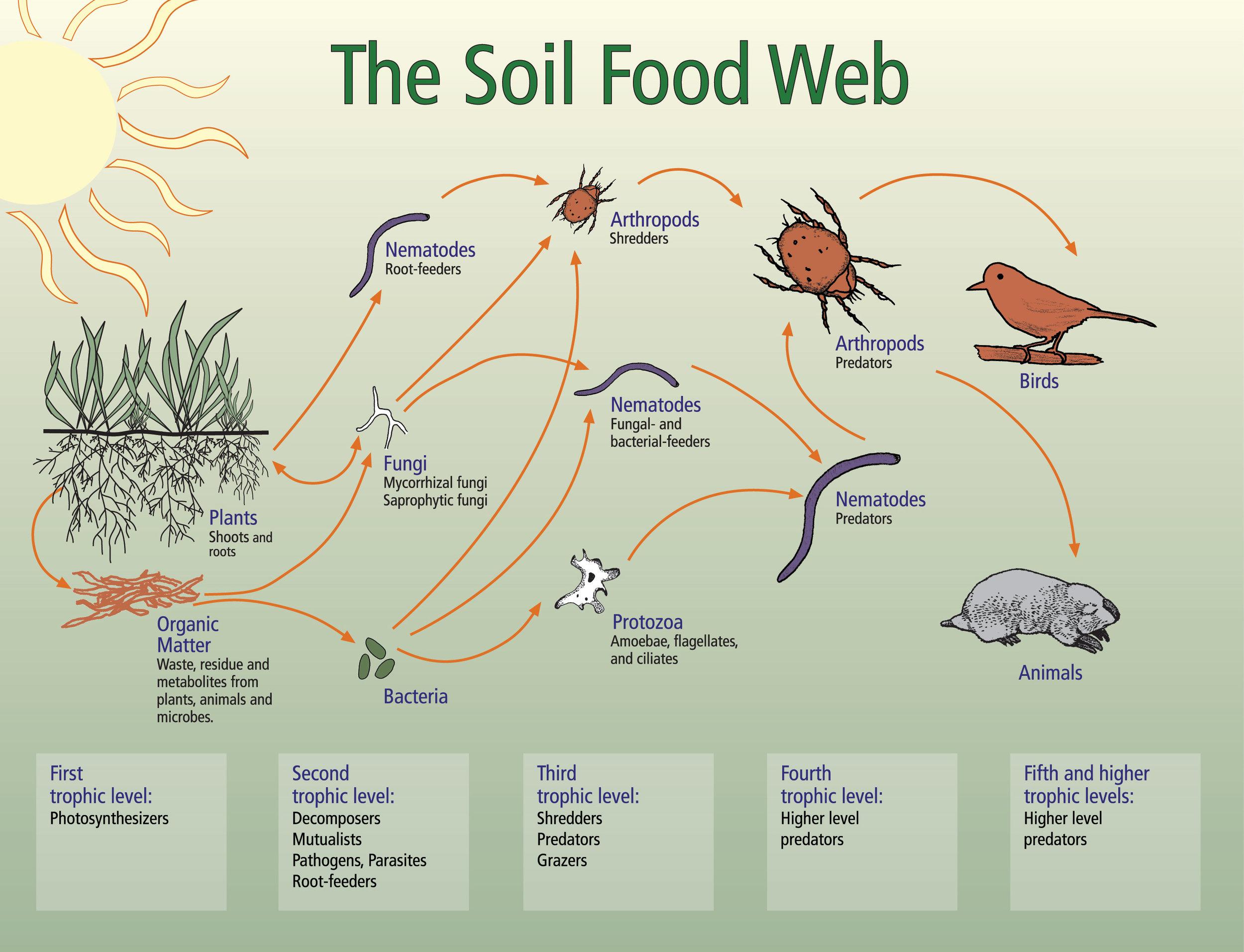 soilFoodWebchart.jpg