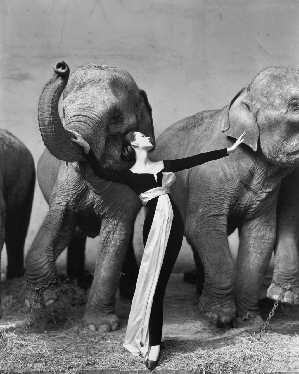 Dovima with Elephants, 1955 - Richard Avedon, from the Photography Book. Richard Avedon's 1955 photo took fashion out of the studio and sought to capture age as much as youthful beauty.