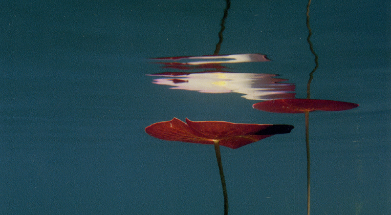 Transom: Under Water    Bill Scully dives in the ponds of Cape Cod, photographing the scenes he finds under water. He talks about his love for photography, and how he ended up with this as a pastime, rather than a career.