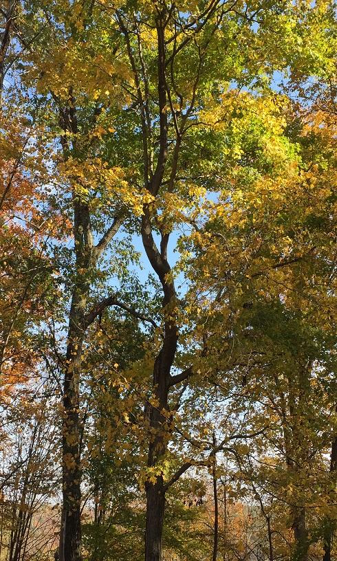Twisted tree2 for freetobe blog Oct 2016.jpg
