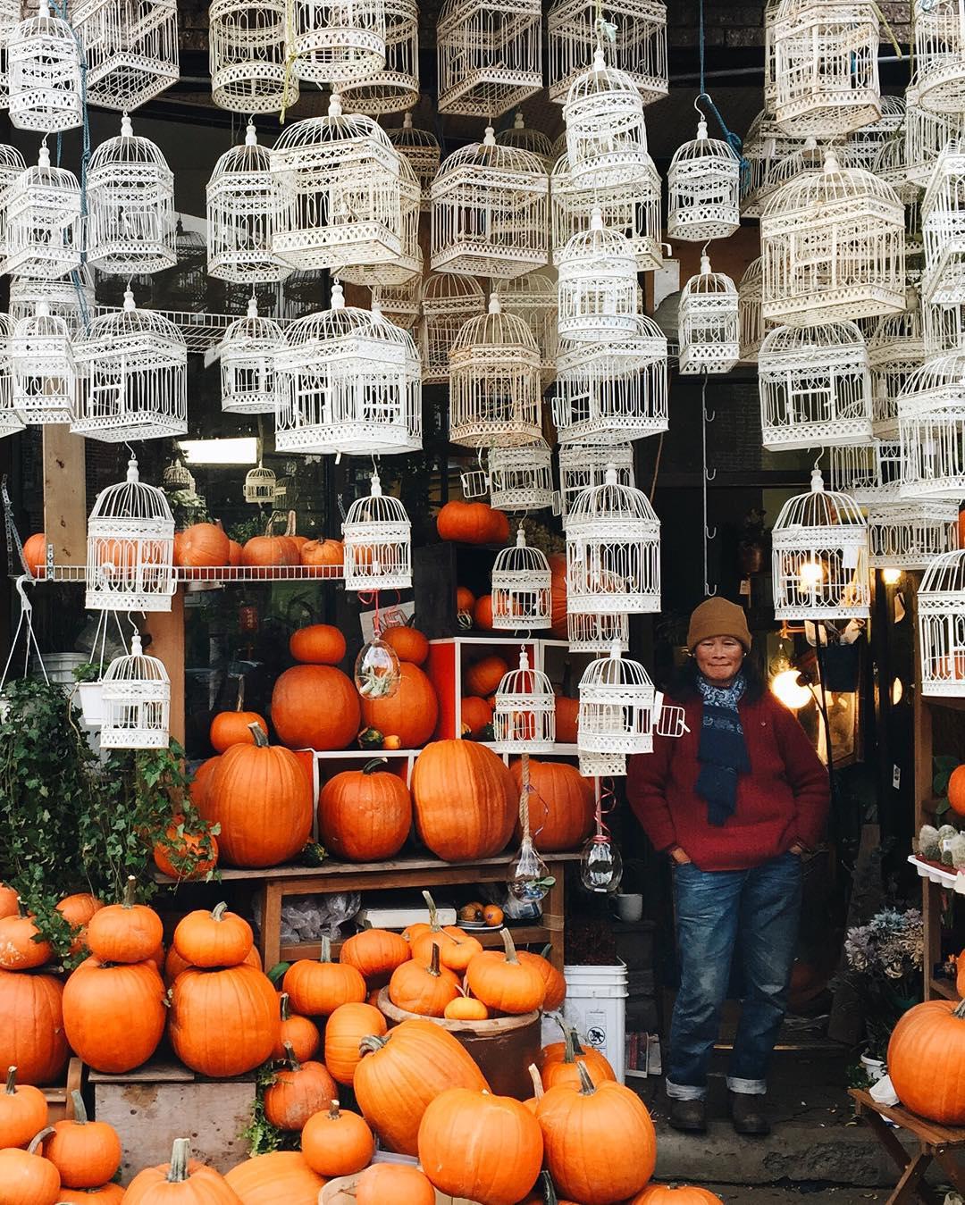 Bernard St. pumpkins