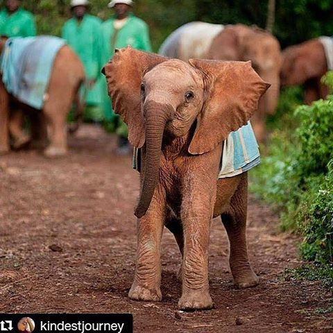 Orphans being taken care of and loved at @dswt 🐘💞 #dswt