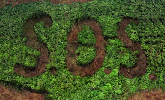 deforestation SOS .jpg