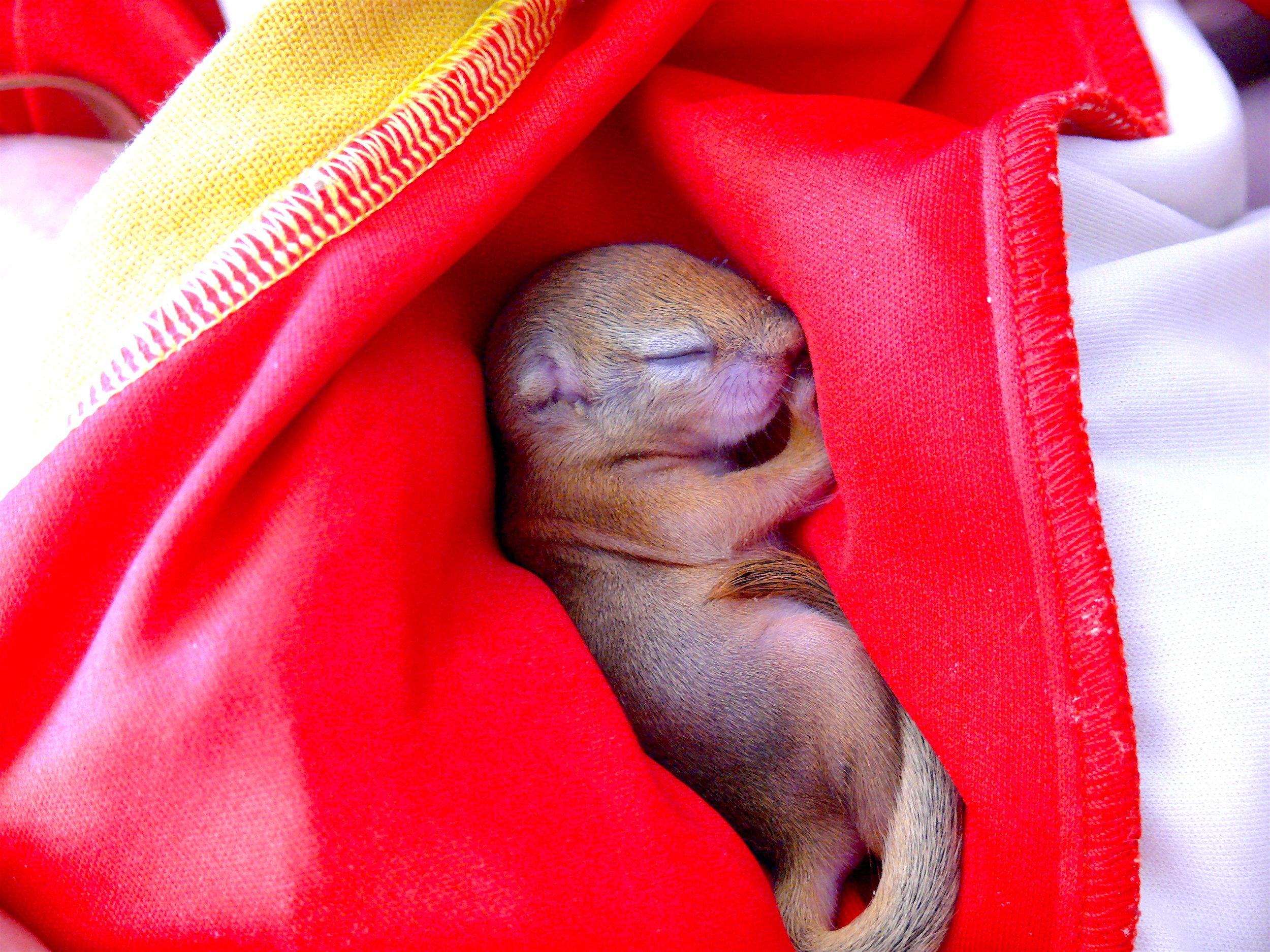 Abandoned Squirrel.JPG