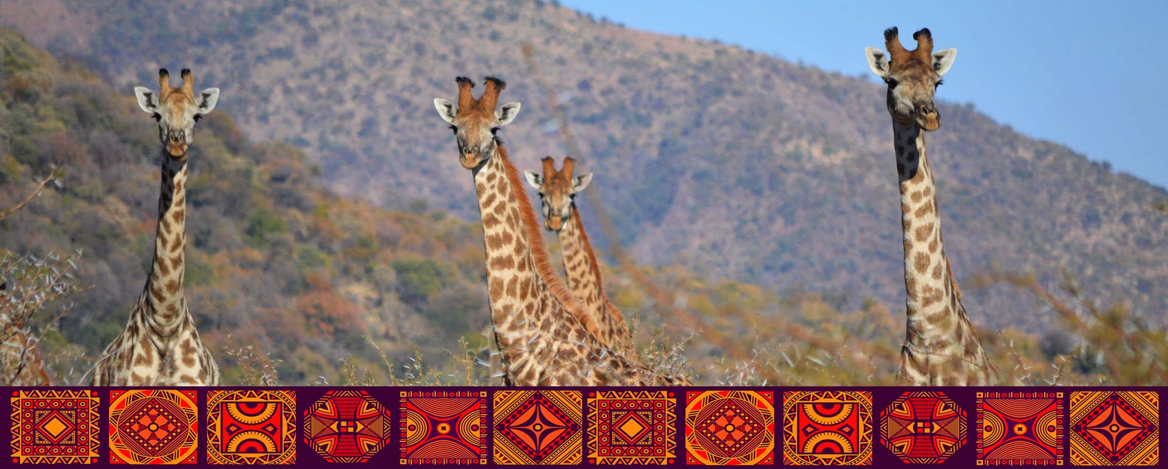 Giraffe Herd w symbols master cropped.jpg