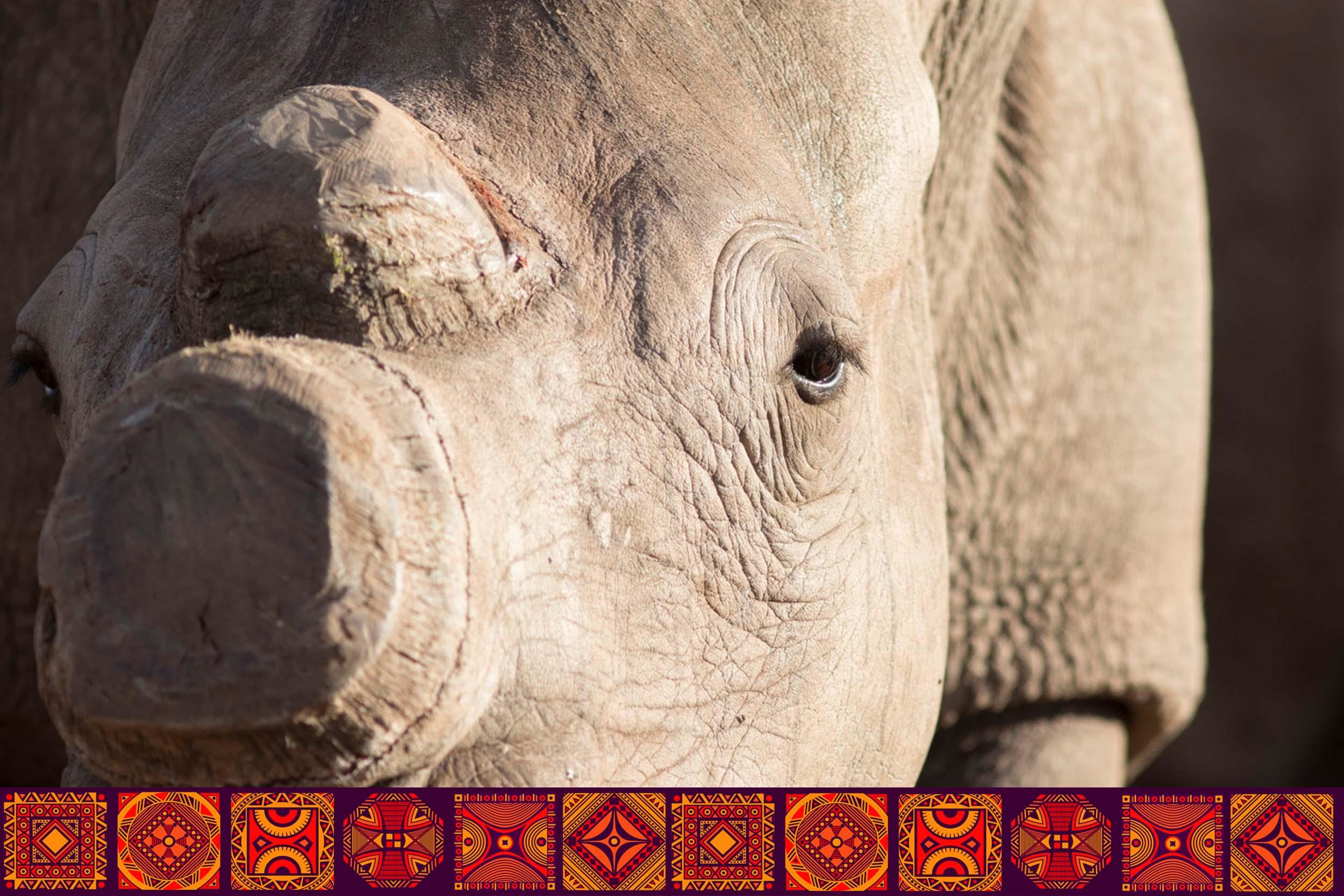 Internships Page Intro Banner w type Game Ranching Rhino.jpg
