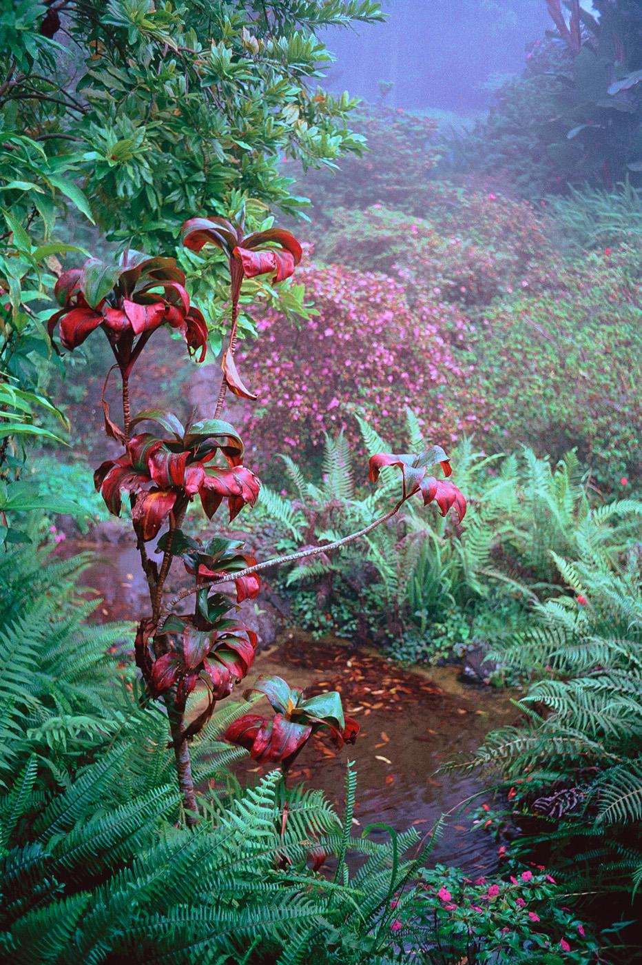 Kula Botanical Gardens, Maui, Hawaii