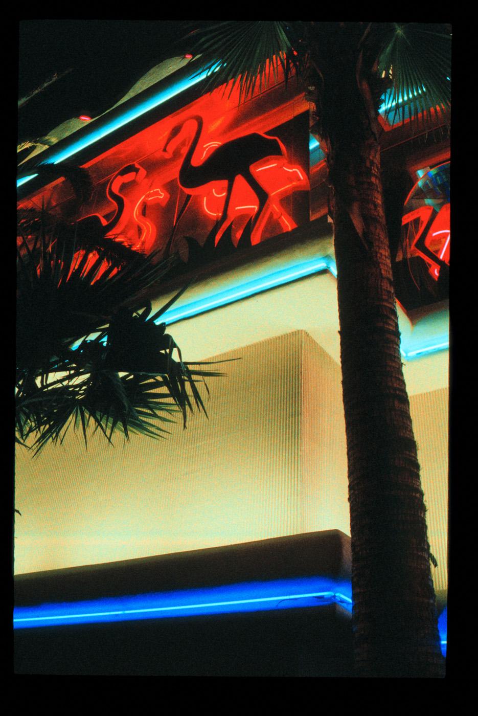 Neon Flamingos, Las Vegas, Nevada