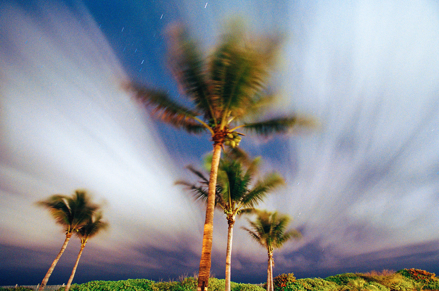 Palms and Sky, Miami, Florida