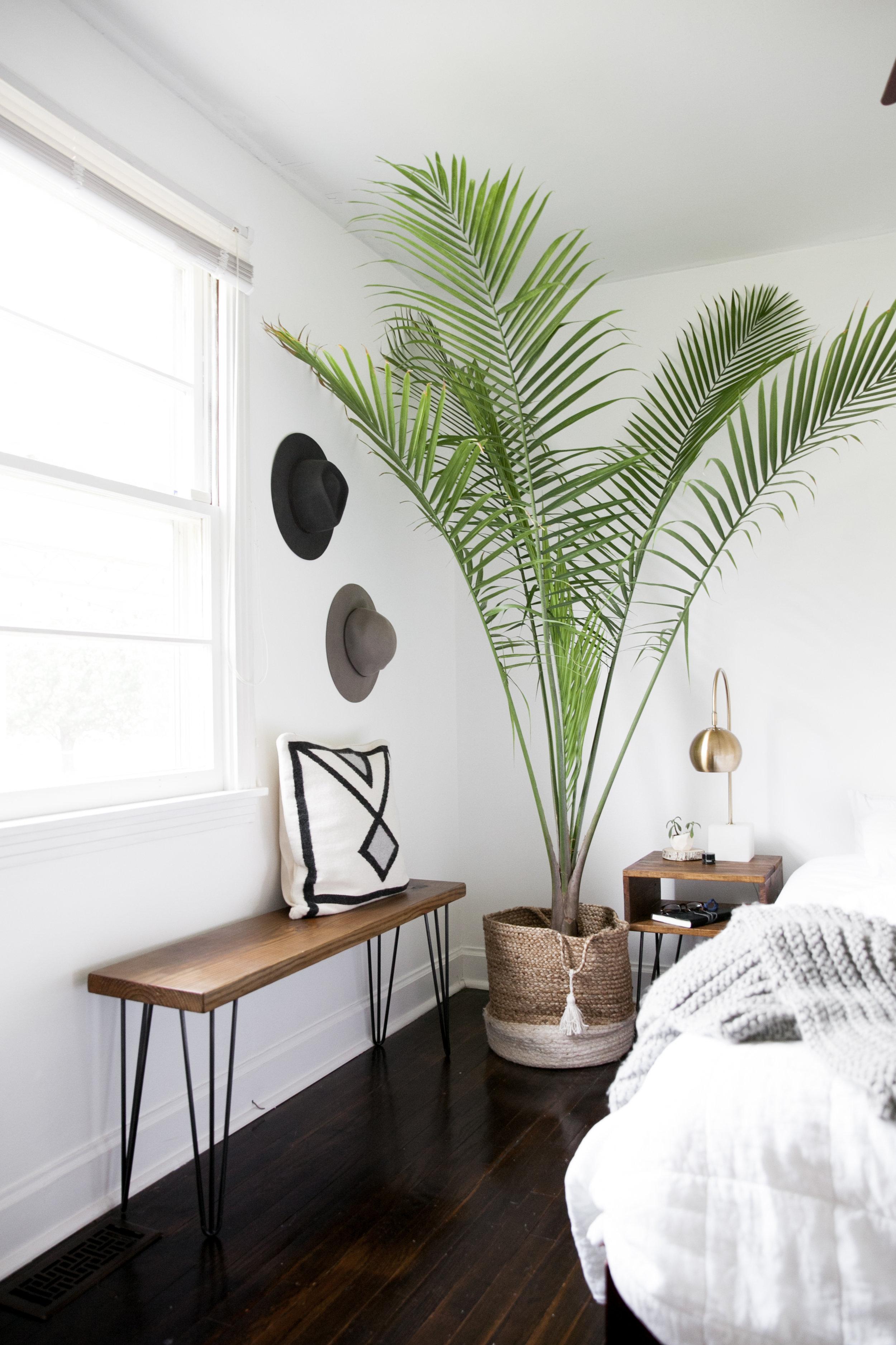 palm kamerplant