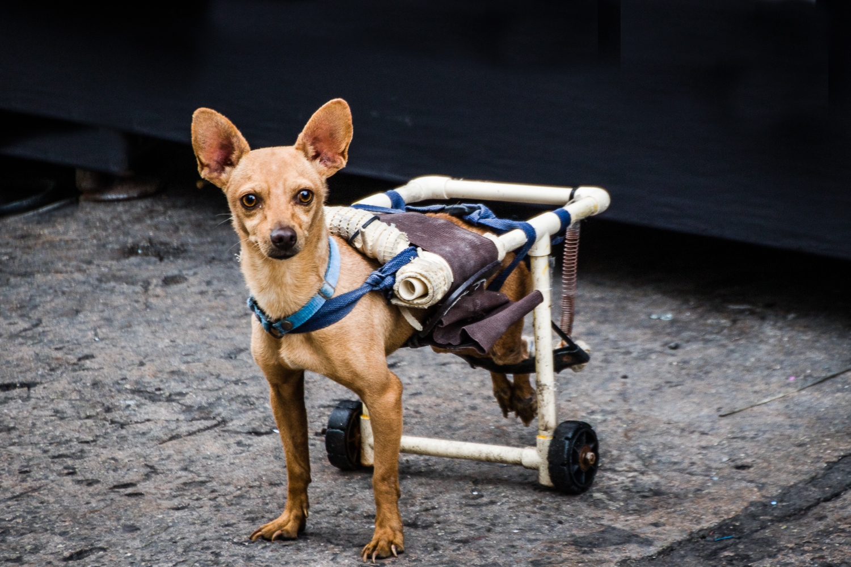 Me, Handicapped?