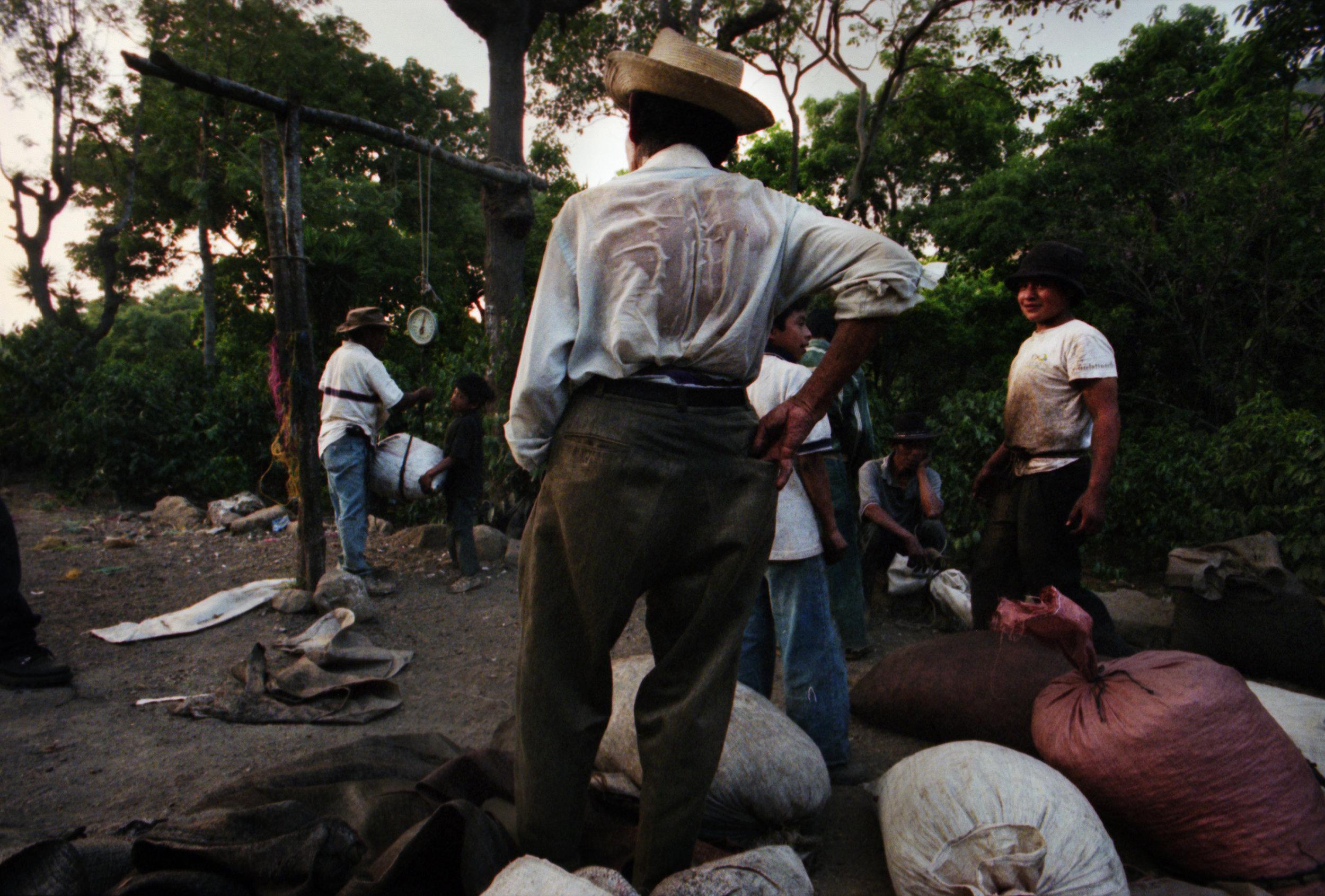 Coffee pickers in Guatemala