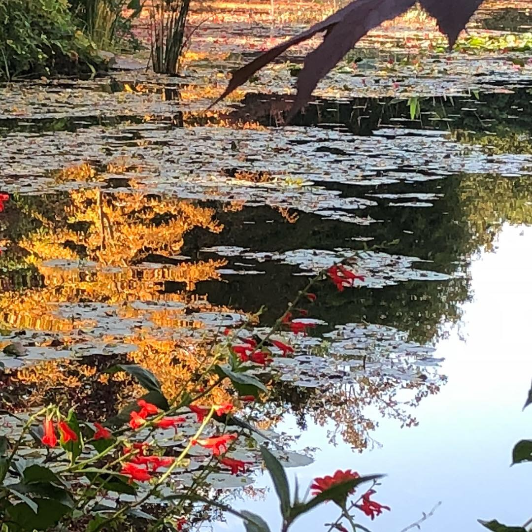 Giverney - Monet's  home with Japanese style gardens and lake