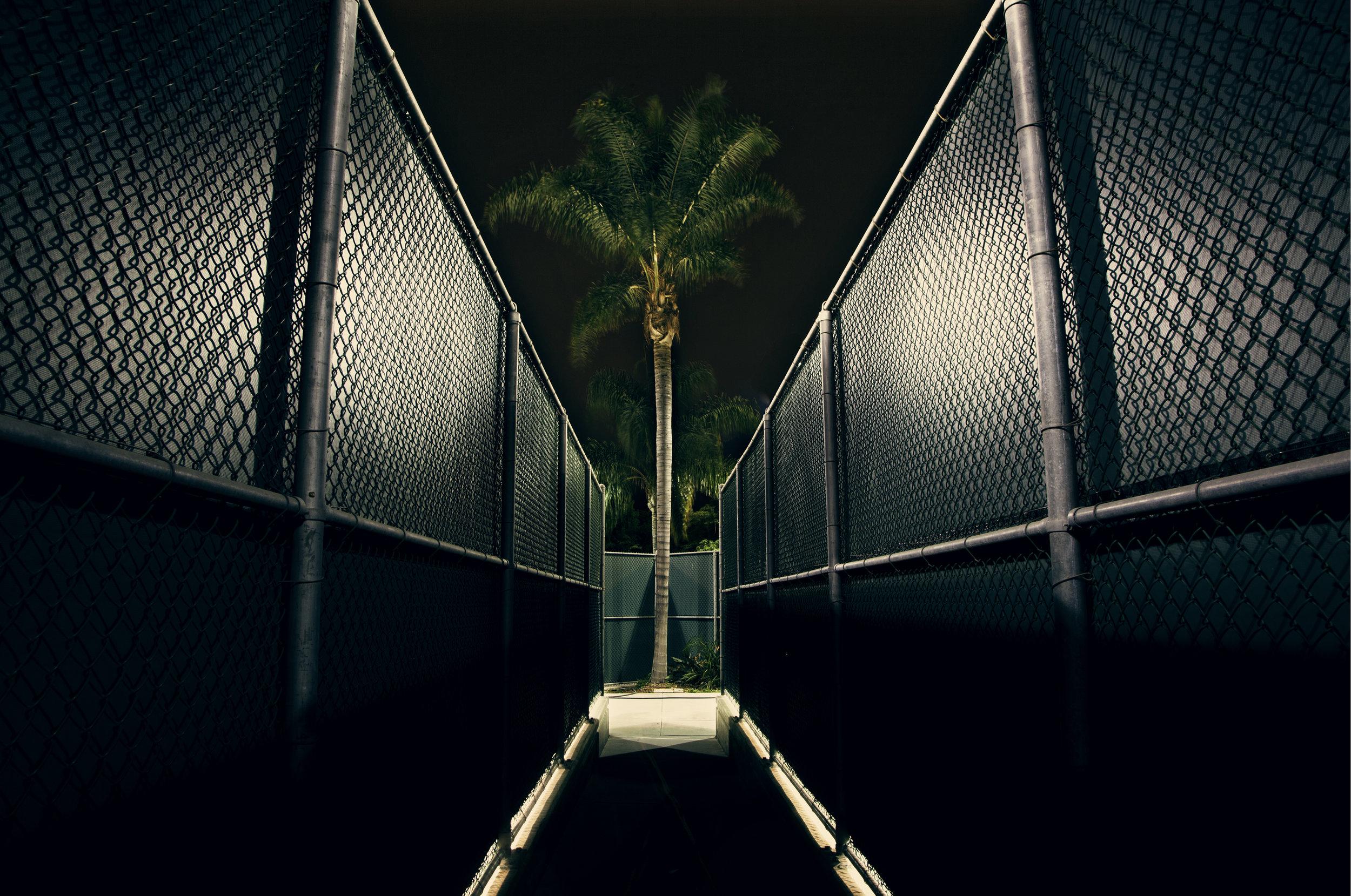 tennis palm.jpg