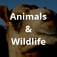 Animals-Wildlife-1.png