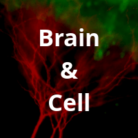 Brain-Cell.png