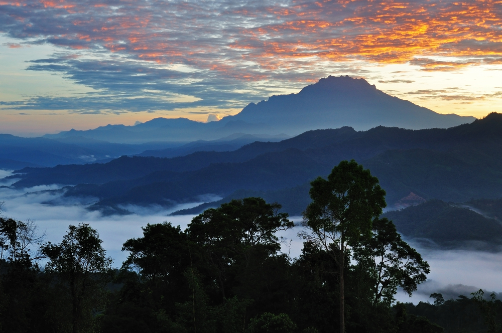 Global conservation, including of rainforests, is a 2018 theme of battery powered. photo:  Nokuro/shutterstock