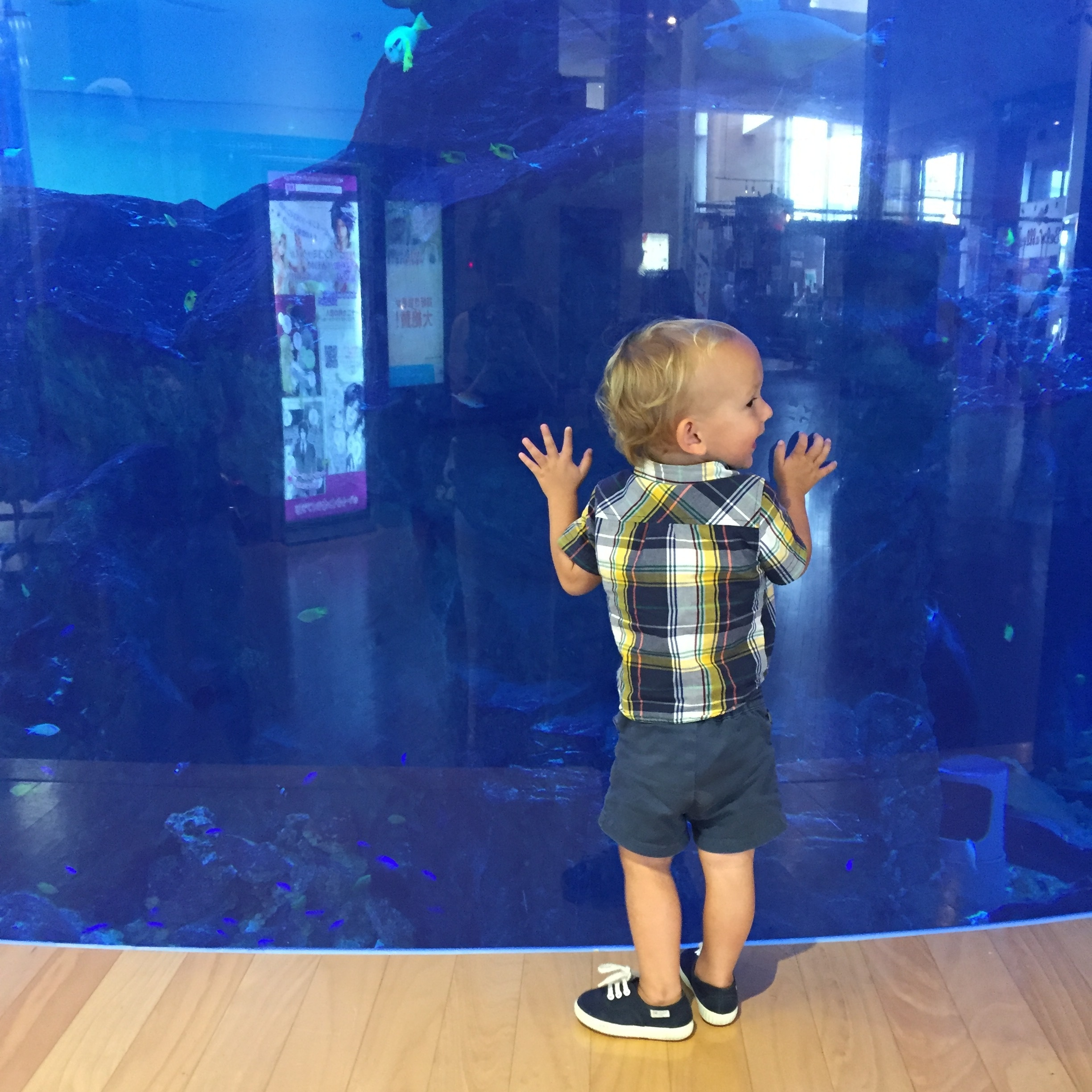 Totally into the aquarium in the port.