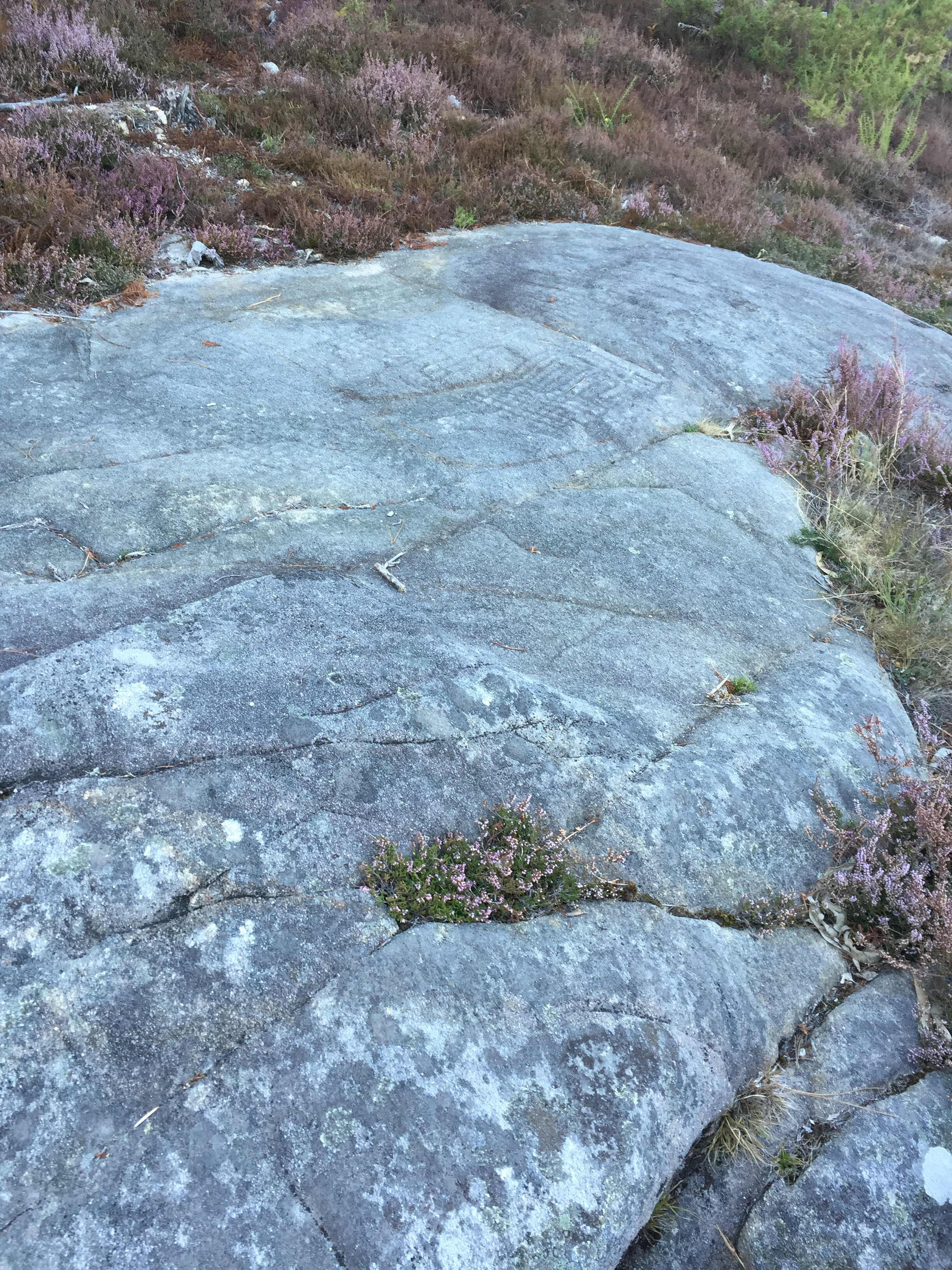 They have also uncovered bronze age petroglyphs in the area.