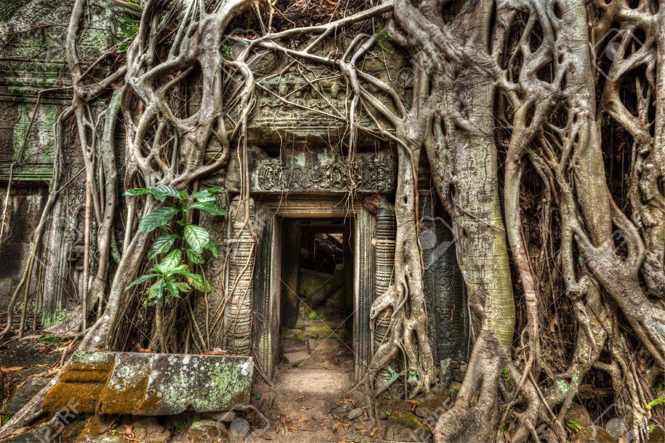 tree cambodia.jpg
