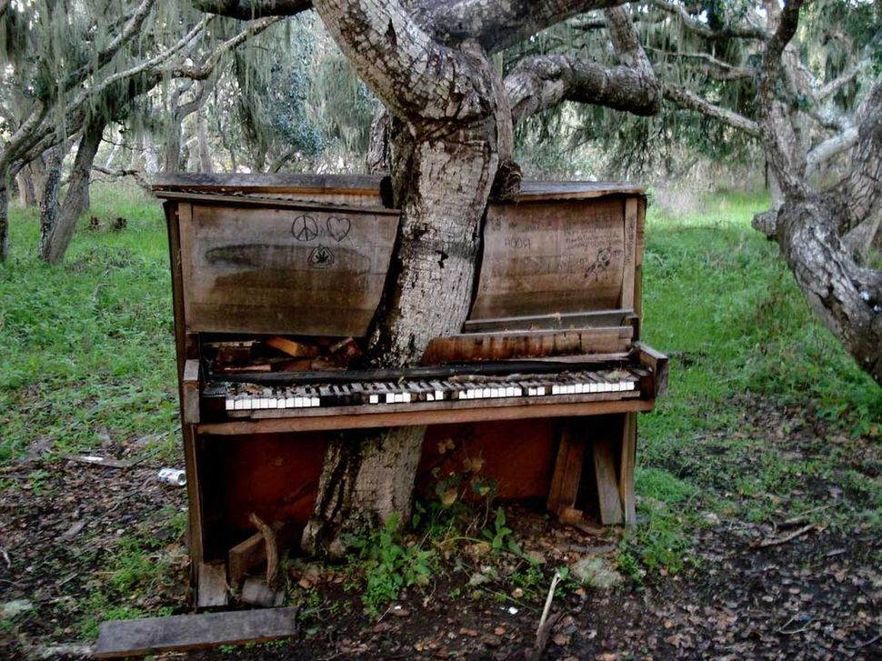 piano embedded in tree.jpg