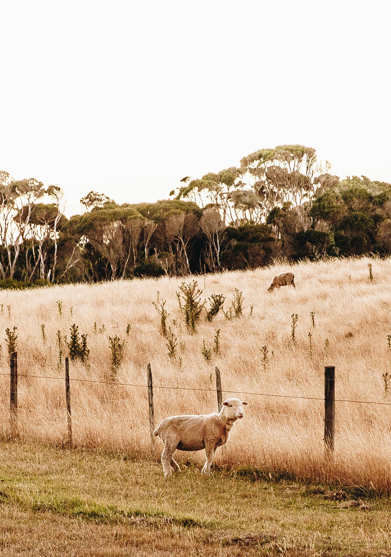 Flinders Island 2.jpg