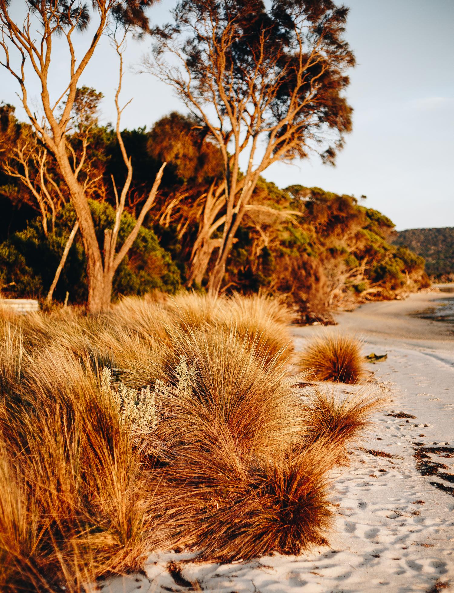 Flinders Island 4.jpg
