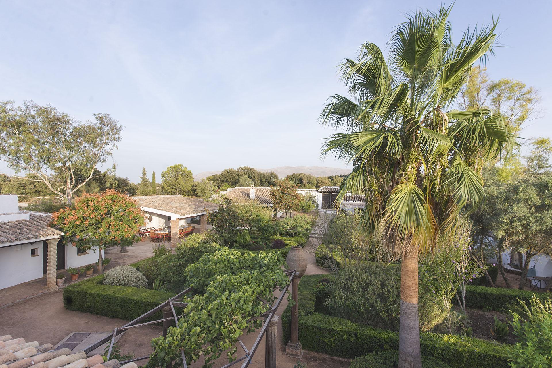 Palm in front garden