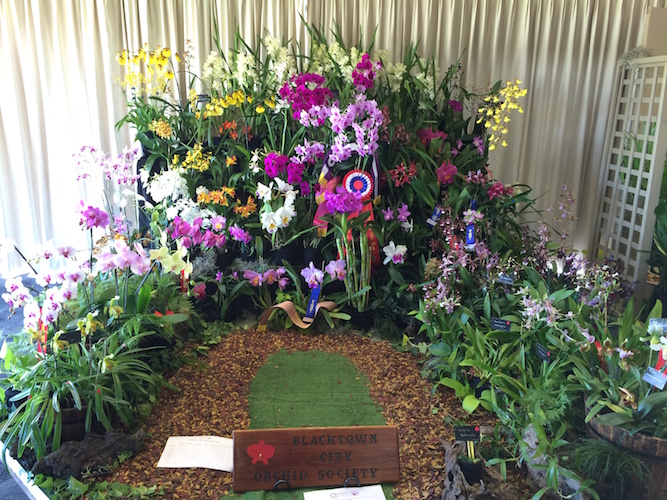 Orchids Out West Display