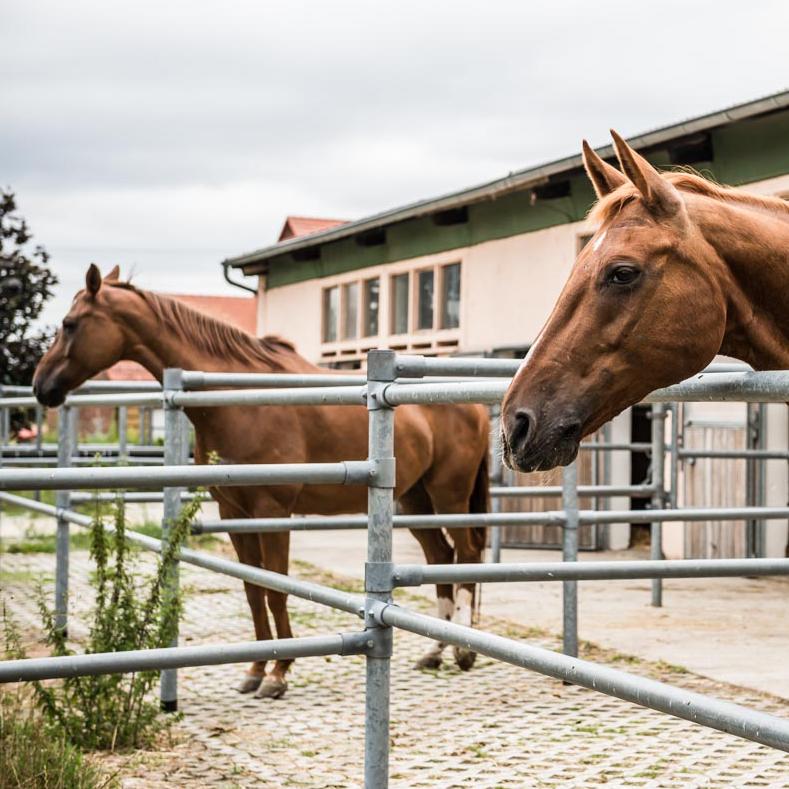 paddock_pferde.jpg