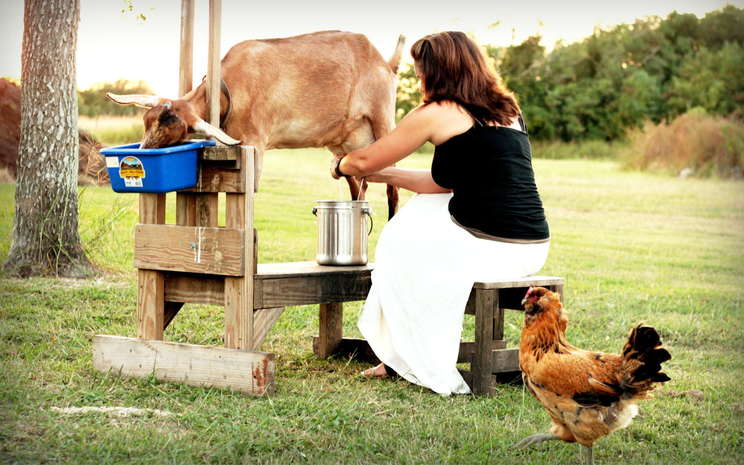 A day in the life of a goat-milking, chicken-ranching, child-chasing mother of three small humans.