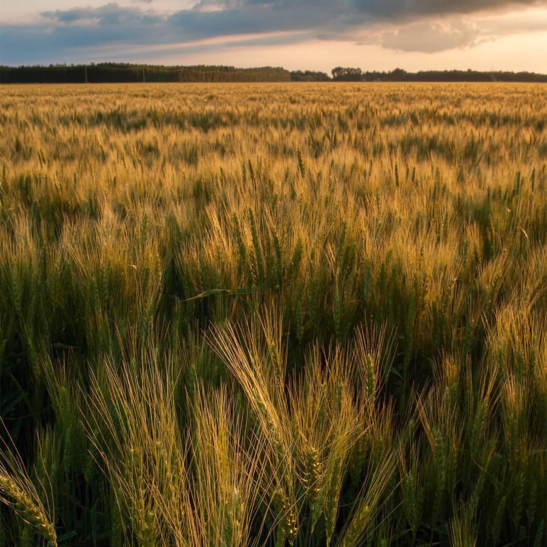 The sun illuminates the prairie landscape. © Robert Lowdon