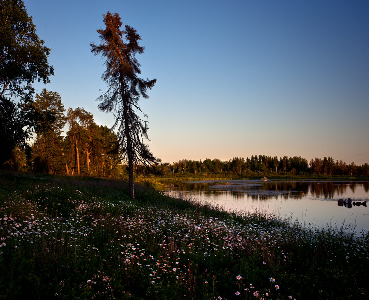 Flowers grow by a lake at sunset in the Whiteshell. © Robert Lowdon