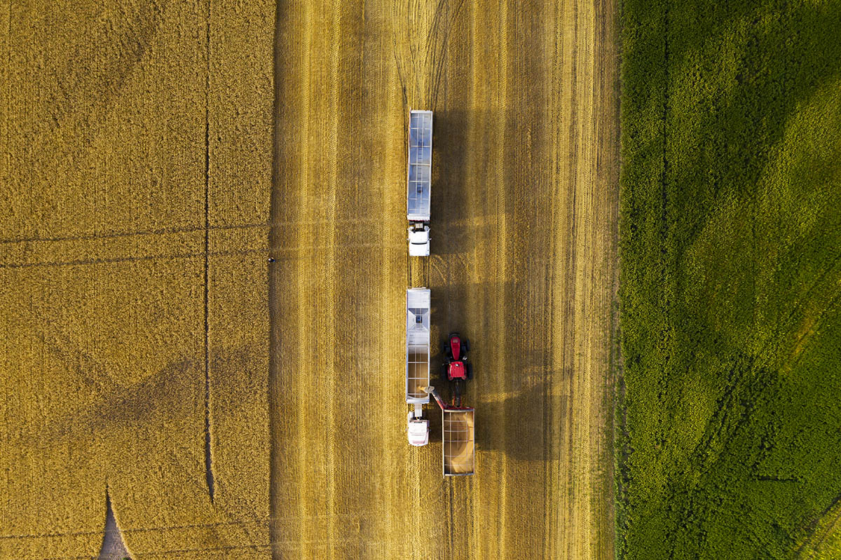 Top view of trailers being filled with grain. © Robert Lowdon
