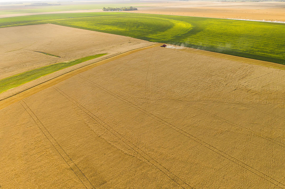Giant agricultural fields in southern Manitoba. © Robert Lowdon