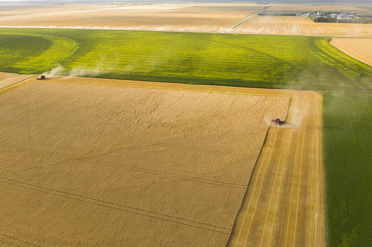 Patterns are formed in the landscape from harvesting grain. © Robert Lowdon