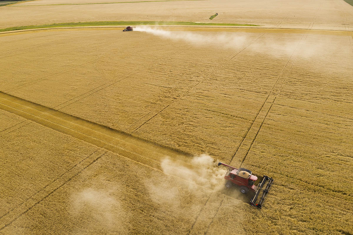 High angle view of the field being harvested. © Robert Lowdon