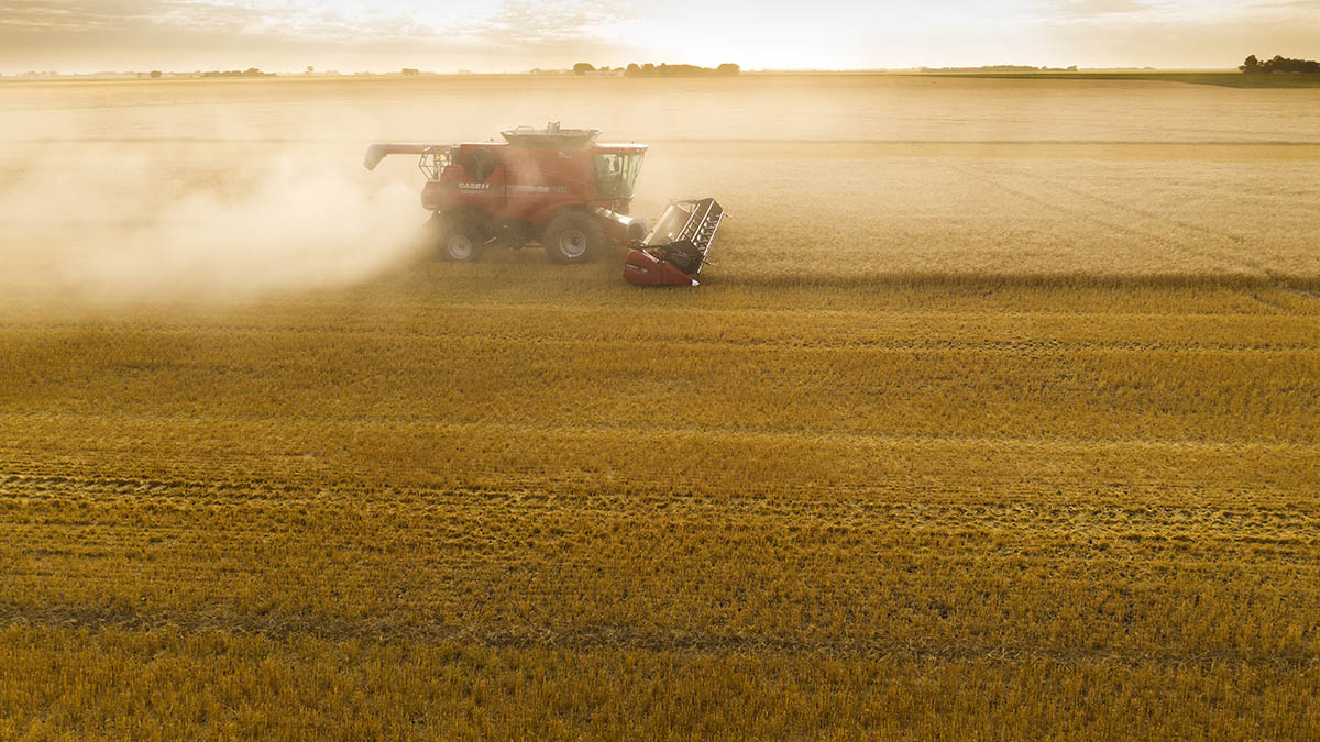 Tracking the combine through the dust cloud. © Robert Lowdon
