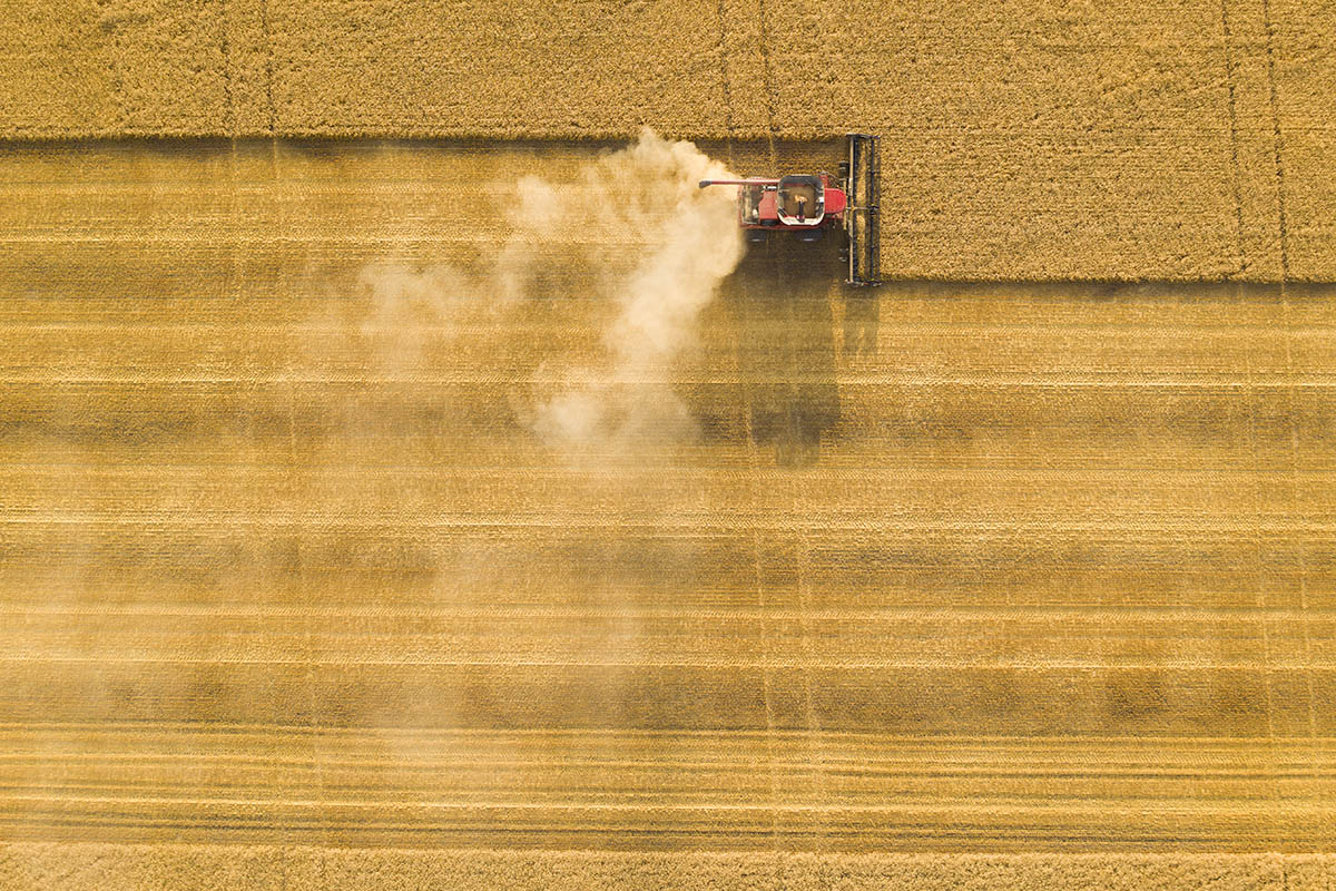 Harvested vs non harvested areas, in the field. © Robert Lowdon
