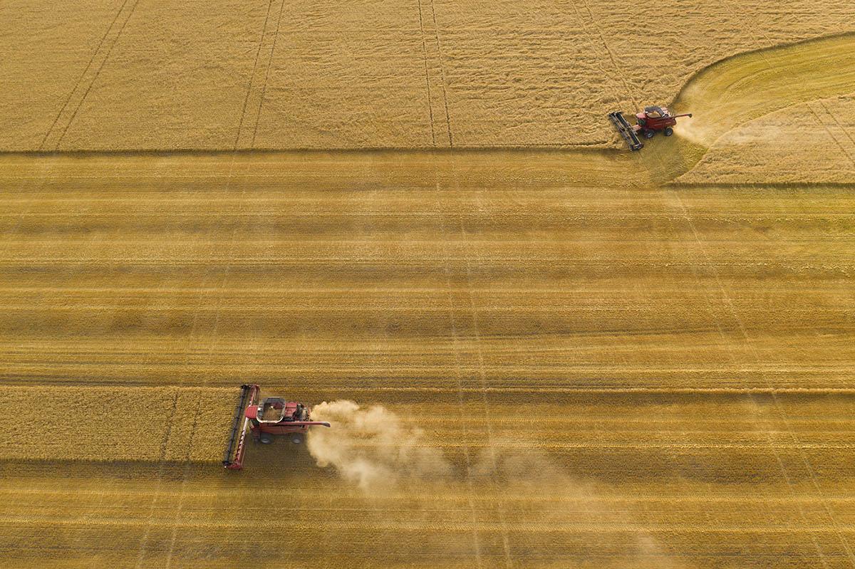 Grain field from above. © Robert Lowdon