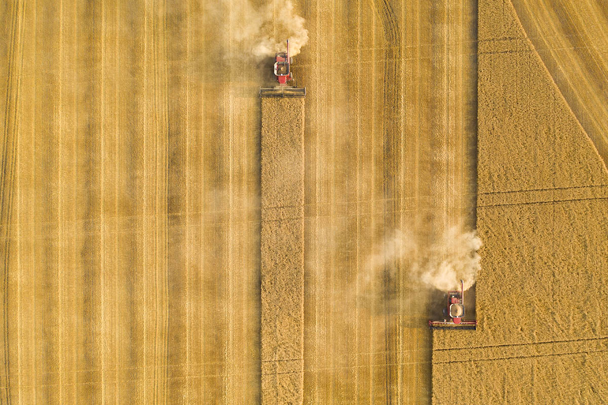 Top down view of the field being harvested. © Robert Lowdon