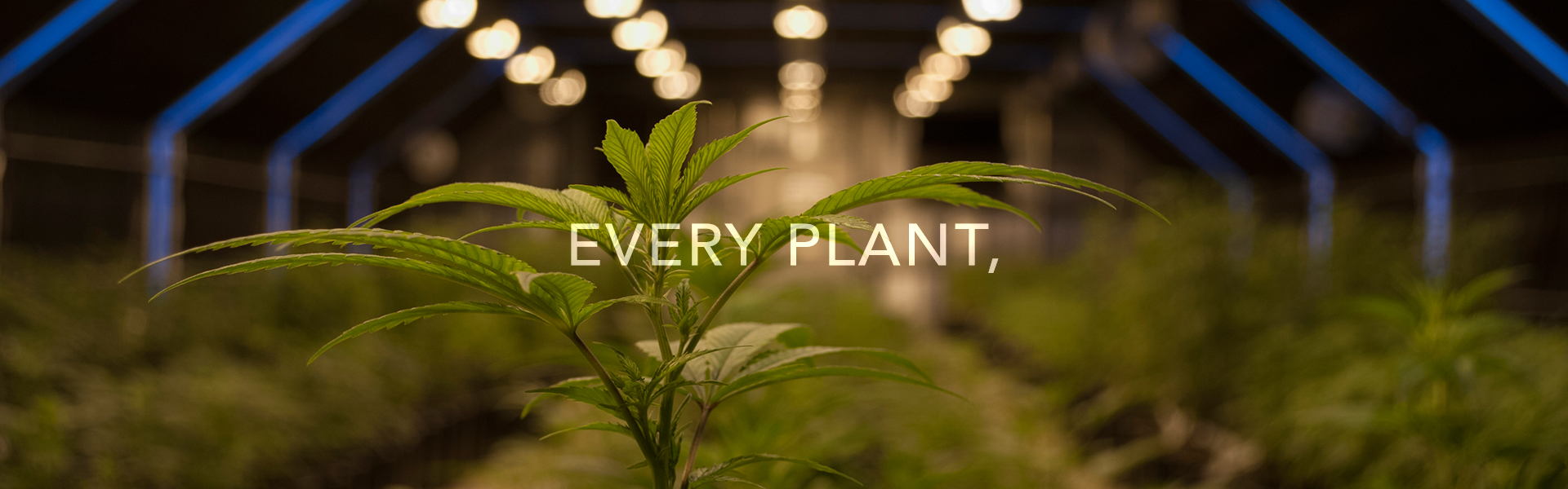 Every Plant.jpg